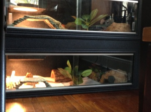 Showcase Cage Bearded Dragon Enclosures