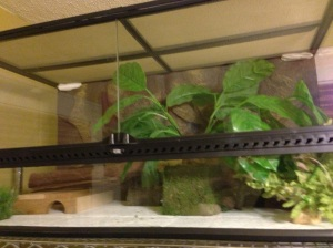 Selma the King Rat Snake's Exo Terra Natural Terrarium